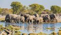Elephants in etosha group of drink at a waterhole Royalty Free Stock Image