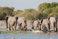 Elephants in etosha group of leave waterhole Stock Photography