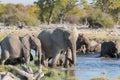 Elephants in etosha mom and baby getting into waterhole Stock Photo