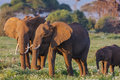 Elephants Family Close Up. Kenya
