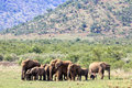 Elephants Family In National  ...