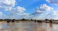 Elephants the gathering large herd of a pool to drink bath and get muddy Stock Photography