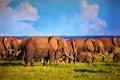 Elephants herd on savanna. Safari in Amboseli, Kenya, Africa Royalty Free Stock Photo