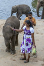 Elephants from the Pinnawala Elephant Orphanage relax on the bank of the Maha Oya River in Sri Lanka. Royalty Free Stock Photo