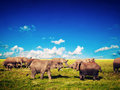 Elephants playing on savanna. Safari in Amboseli, Kenya, Africa Stock Image