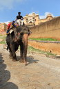 Elephants ride in amber fort. Royalty Free Stock Photos