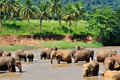 Elephants river Stock Images