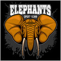 Elephants - sport club team symbol. Safari hunt badge of yellow, elephant tusk.