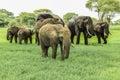 Elephants in tarangire national park tanzania Royalty Free Stock Image