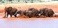 Elephants tsavo east national park in kenya Stock Images