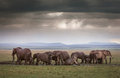 Elephants under stormy skies an elephant family mud bath after rains in the masai mara kenya Stock Photos