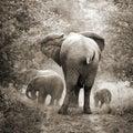 Elephants, vintage style