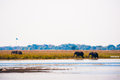 Elephants walking Royalty Free Stock Photos