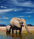 Elephants at watering Stock Image