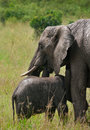 Elephants wild elephant mother and baby in maasai mara national park kenya Stock Photos