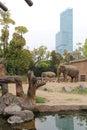 Elephants - Zoo Of Osaka - Japan