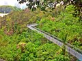 Elevated boardwalk in forest park steel walkway at tropical rainforest near telok blangah hill singapore Stock Images