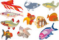 Eleven color fishes Stock Image