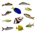 Eleven isolated fishes Stock Photography