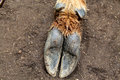 Elk hoof in dirt picture of an the Royalty Free Stock Photography