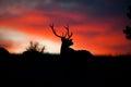 Elk Silhouette Royalty Free Stock Photo
