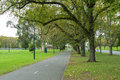 Elm trees and London plane tree along peaceful path at Alexandra Royalty Free Stock Photo