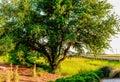 Embarcadero hermoso de la cala del shem del pantano de charleston south carolina del paisaje Imagen de archivo libre de regalías