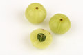 Emblic Myrabolan, Malacca Tree, Indian Gooseberry (PHYLLANTHUS EMBLICA LINN.), Fruit. Royalty Free Stock Photo