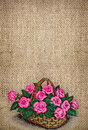 Embroidered pink roses Royalty Free Stock Photo
