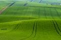 Emerald green agricultural field Immagini Stock Libere da Diritti