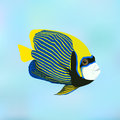 Emperor angelfish. Pomacanthus imperator. Vector illustration of Royalty Free Stock Photo