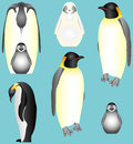 Emperor penguins collection of isolated young birds penguin family Royalty Free Stock Images