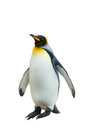 Emperor penguins isolated on white background Stock Photography