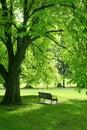 Empty bench in green garden Royalty Free Stock Photo