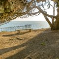 Empty bench under a tree overlooking Scripps Pier Royalty Free Stock Photo
