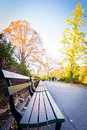 Empty benches in autumn at Central Park Royalty Free Stock Photo
