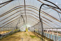 Empty big vegetable greenhouse Royalty Free Stock Photo