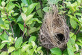 Empty bird nest on tree Royalty Free Stock Photo