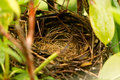 Empty birds nest after the chicks left Royalty Free Stock Photo