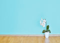 Empty blue wall and wooden floor room Royalty Free Stock Photo