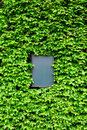 Empty board surrounded by leaves of ivy Royalty Free Stock Photos