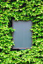 Empty board surrounded by leaves of ivy, closeup Stock Photo