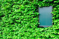 Empty board surrounded by leaves of ivy, skew view Royalty Free Stock Photo
