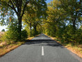 Empty countryside road with autumn trees Royalty Free Stock Photography