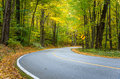 Empty Curving Road Through Woods Royalty Free Stock Photo
