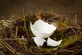 Empty egg in nest Royalty Free Stock Photo