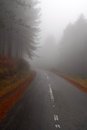 Empty foggy road Stock Photography