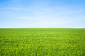 Empty Grass Field Royalty Free Stock Photo