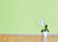 Empty green wall and wooden floor room Stock Photography