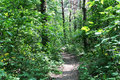Empty hiking trail Royalty Free Stock Photo